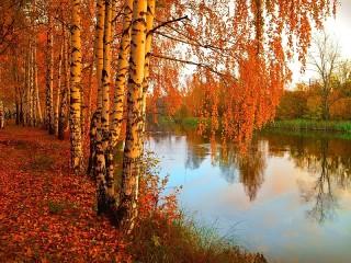 Собирать пазл Осенние берёзы онлайн