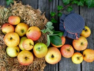 Собирать пазл Осенние яблоки онлайн