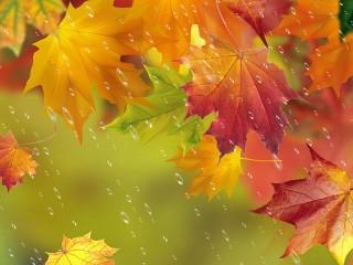 Собирать пазл Осенний дождь онлайн