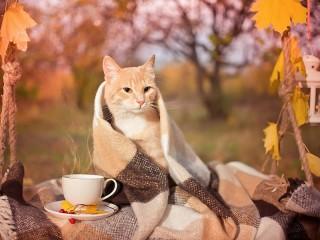 Собирать пазл Осенний кот онлайн