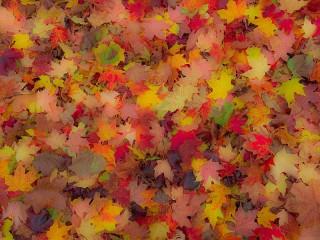 Собирать пазл Осенний ковёр онлайн