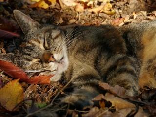 Собирать пазл Осенний сон онлайн