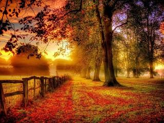 Собирать пазл Осенний забор онлайн