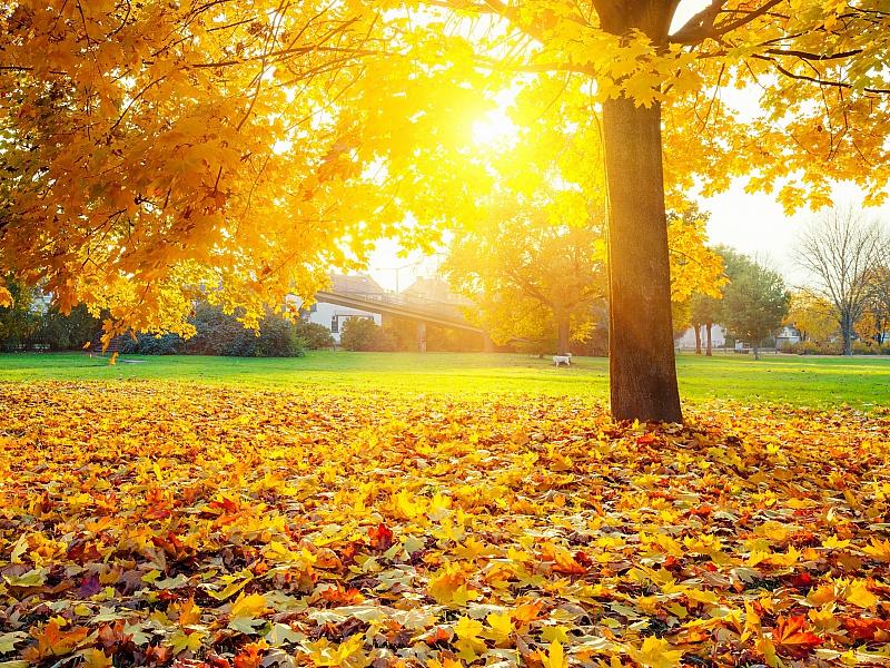Пазл Собирать пазлы онлайн - Осенний день