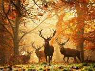 Собирать пазл Осенний гон онлайн