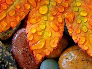 Собирать пазл Осенний лист онлайн