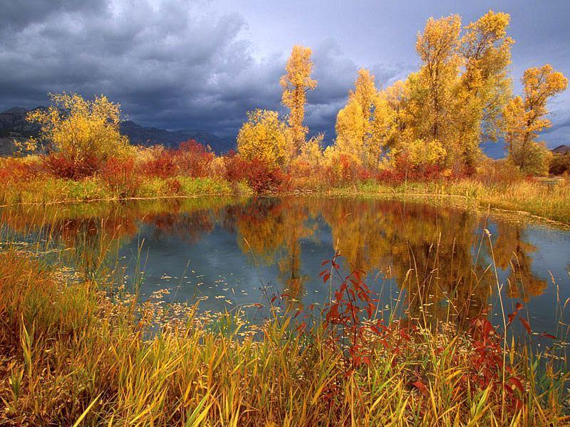 Пазл Собирать пазлы онлайн - Осенний пруд