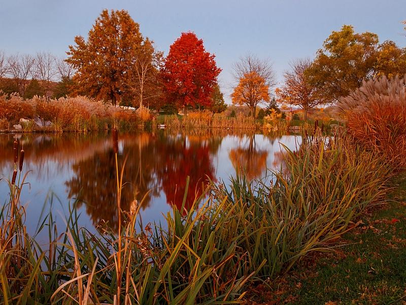 Пазл Осенний пруд