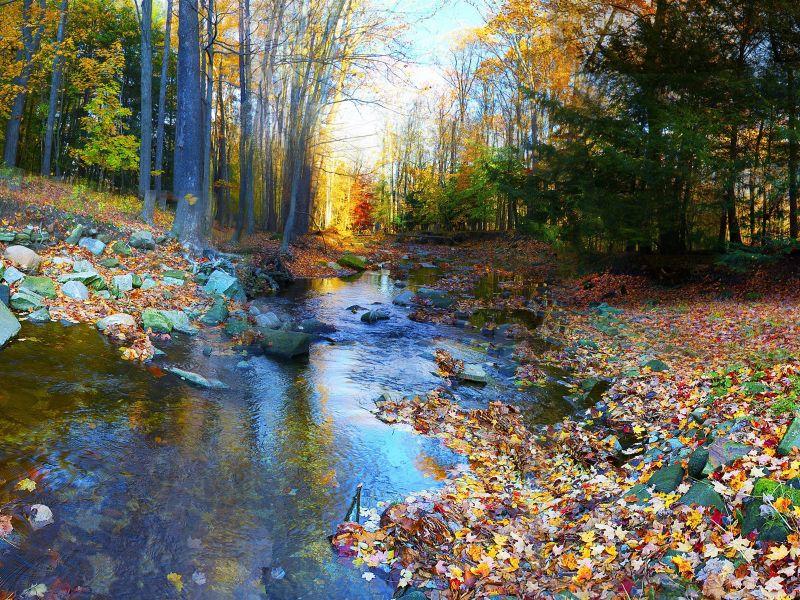 Пазл Собирать пазлы онлайн - Осенний ручей