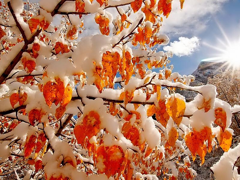 Пазл Собирать пазлы онлайн - Осенний снегопад
