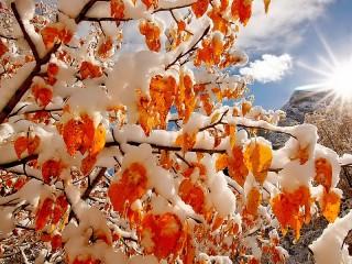 Собирать пазл Осенний снегопад онлайн
