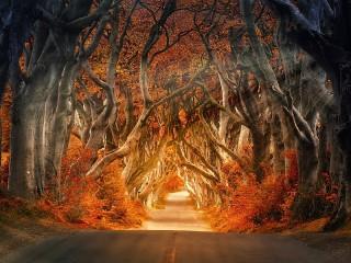 Собирать пазл Осенняя аллея онлайн