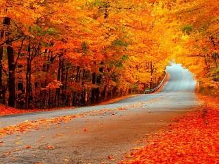 Собирать пазл Осенняя дорога онлайн
