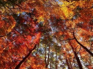 Собирать пазл Осенняя крона онлайн