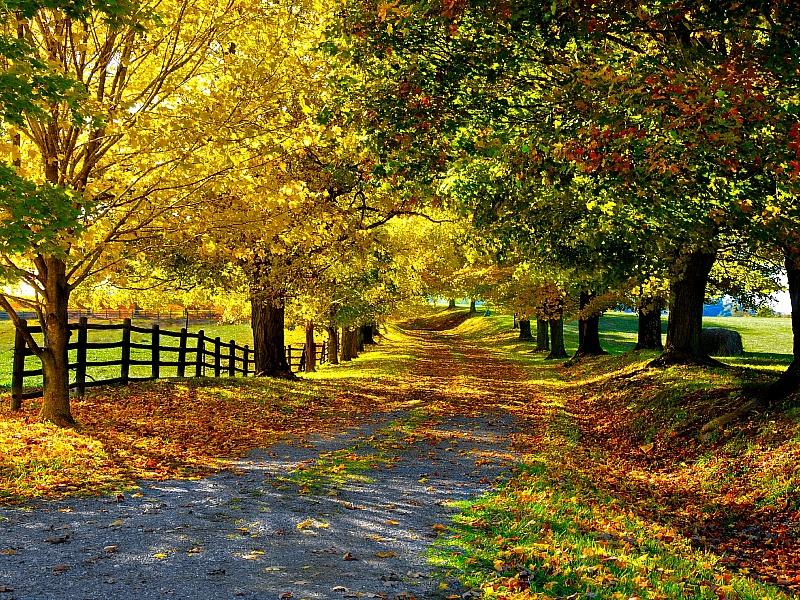 Пазл Собирать пазлы онлайн - Осенняя природа