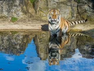 Собирать пазл Отражение в воде онлайн