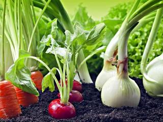 Собирать пазл Овощи на грядке онлайн