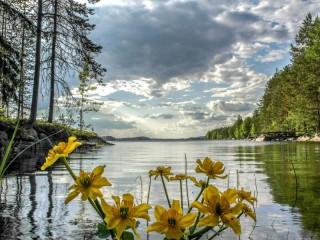 Собирать пазл Озеро и цветы онлайн