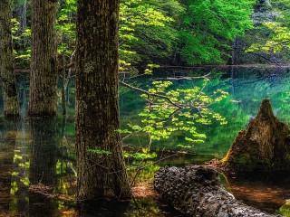 Собирать пазл Озеро в лесу онлайн
