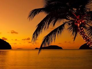 Собирать пазл Пальма на закате онлайн