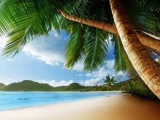 Собирать пазл Пальмы у берега онлайн