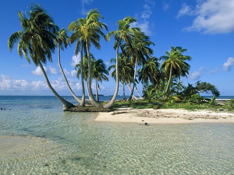 Пазл Собирать пазлы онлайн - Пальмовый остров
