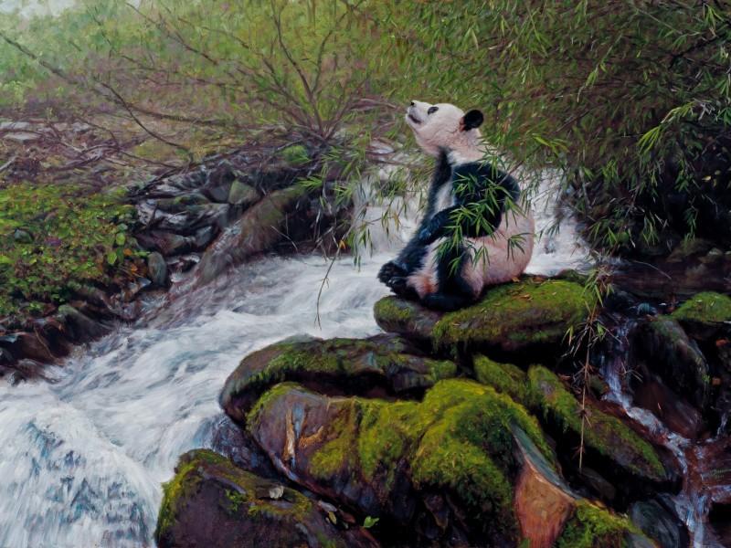 Пазл Собирать пазлы онлайн - Панда на берегу