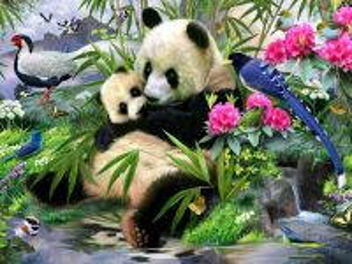 Собирать пазл Панды и птицы онлайн