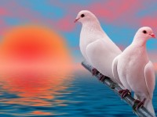 Собирать пазл Пара голубей онлайн