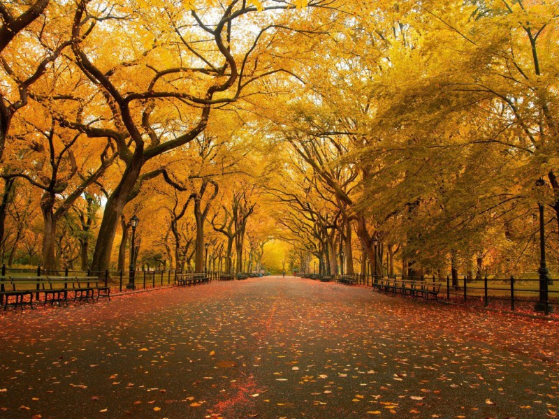 Пазл Собирать пазлы онлайн - Осенний парк