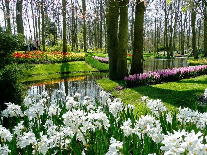 Пазл Собирать пазлы онлайн - Парк цветы