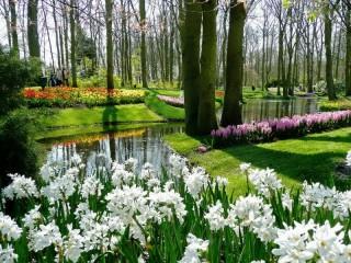 Собирать пазл Парк цветы онлайн
