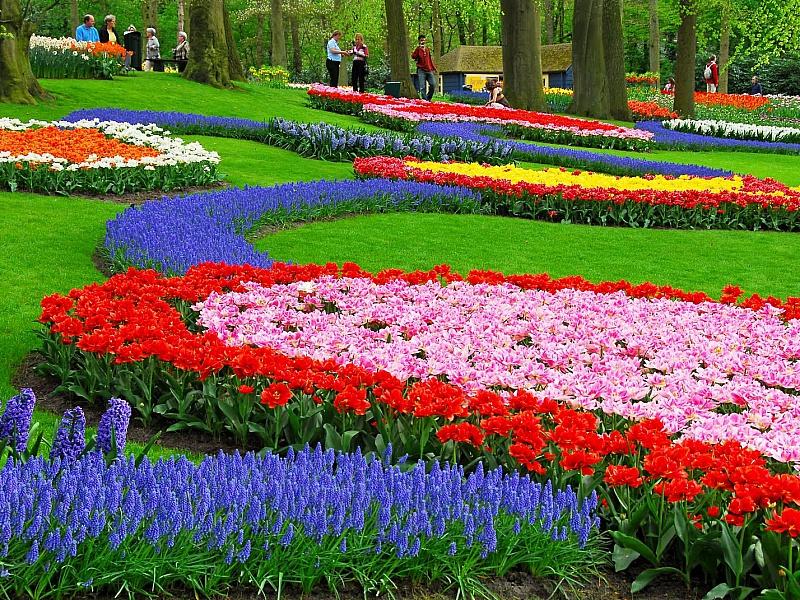 Пазл Собирать пазлы онлайн - Парк цветов