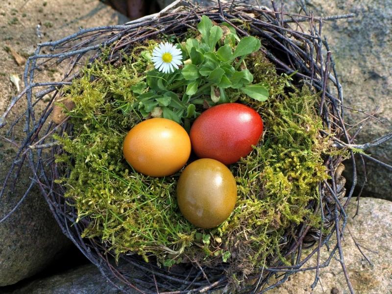 Пазл Собирать пазлы онлайн - Пасхальное гнездо