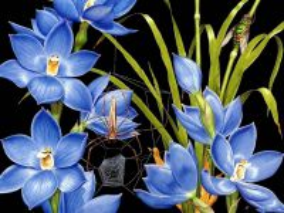 Собирать пазл Паутина на цветах онлайн