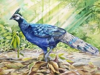 Собирать пазл Павлиний фазан онлайн