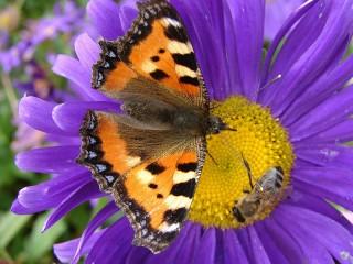 Собирать пазл Пчела и бабочка онлайн
