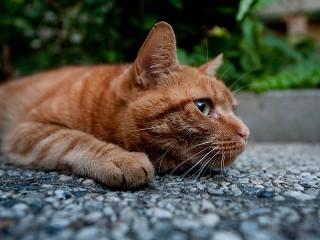 Собирать пазл Печальный кот онлайн