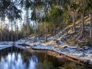 Собирать пазл Первый снег в лесу онлайн