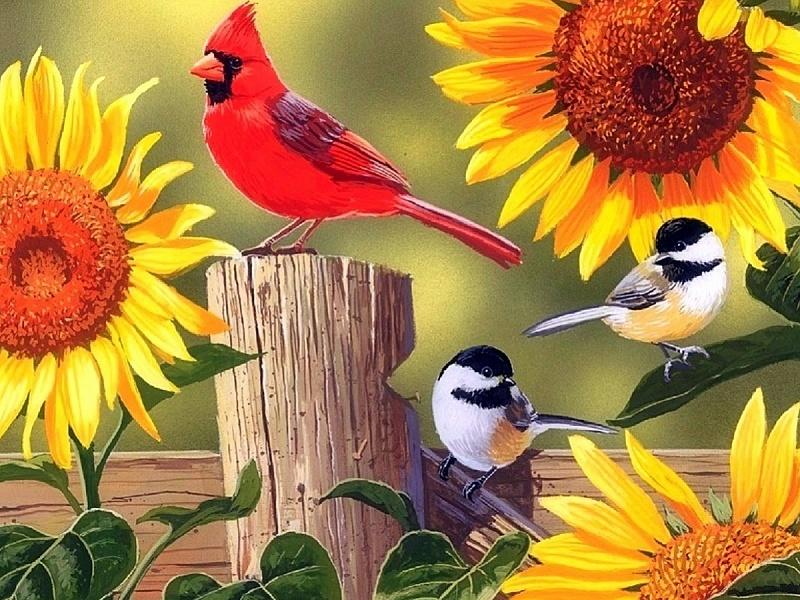 Пазл Собирать пазлы онлайн - Певчие птицы