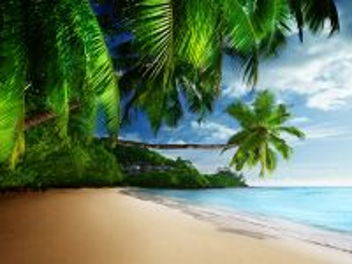 Собирать пазл Пейзаж тропики онлайн