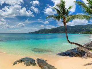 Собирать пазл Пляж и пальмы онлайн