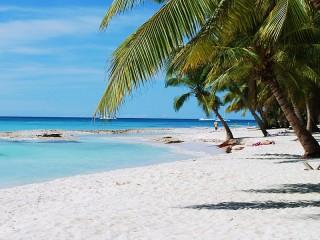 Собирать пазл Пляж под пальмами онлайн