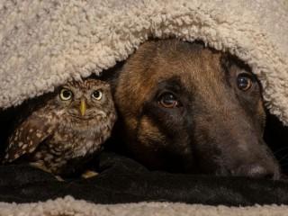 Собирать пазл Под одеялом онлайн