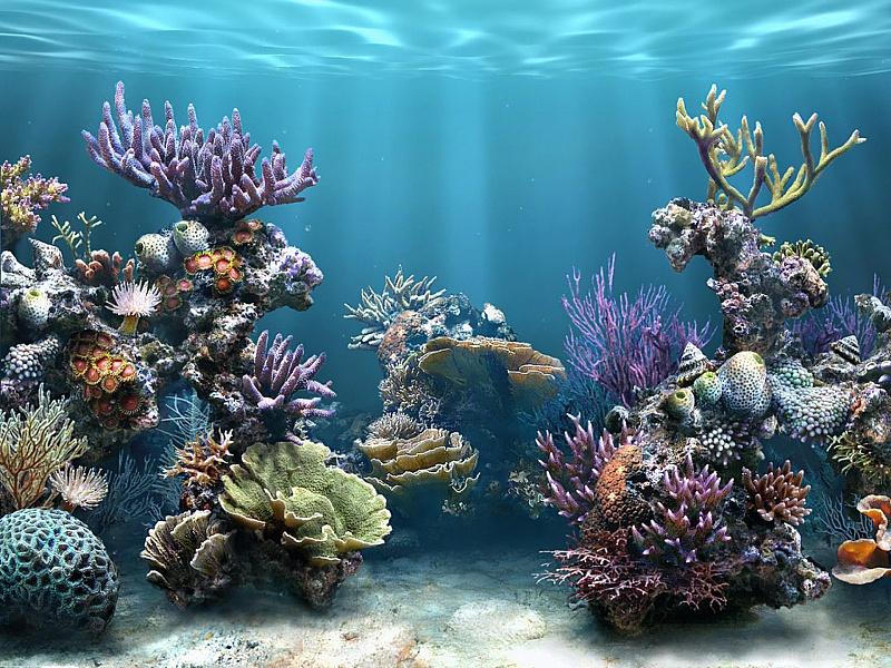 Пазл Собирать пазлы онлайн - Под водой