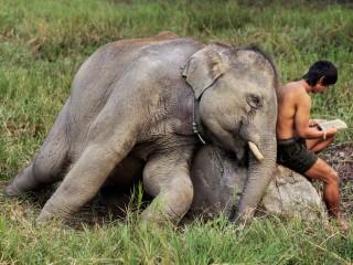 Собирать пазл Мальчик и слоненок онлайн