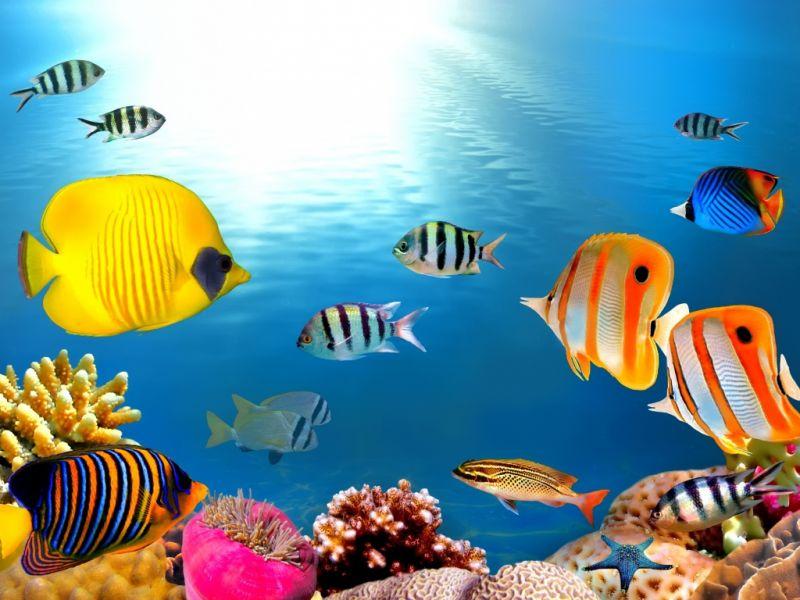 Пазл Собирать пазлы онлайн - Подводные жители