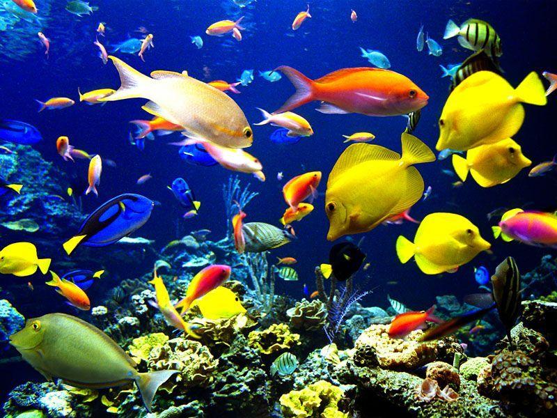 Пазл Собирать пазлы онлайн - Подводный мир 2