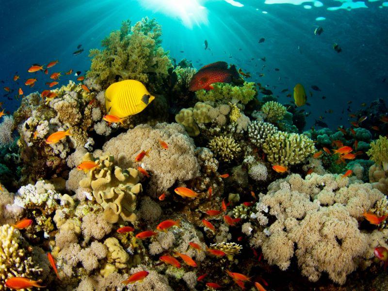 Пазл Собирать пазлы онлайн - Подводный мир  N