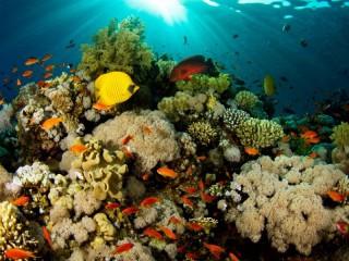 Собирать пазл Подводный мир  N онлайн